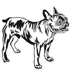 decorative standing portrait of french bulldog vector image