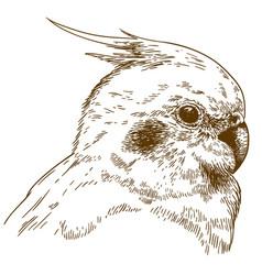 Engraving of cockatiel head vector