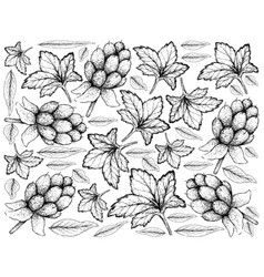 hand drawn of fresh cloudberry on white background vector image