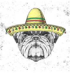 Hipster animal bulldog wearing a sombrero hat vector
