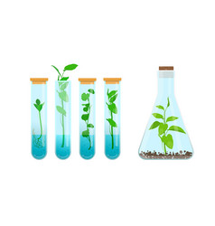 plants in test tubes vector image