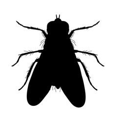 Insect silhouette Sticker ground beetle bug vector image vector image