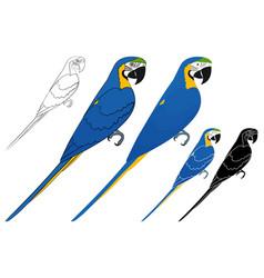 Arara caninde bird in profile view vector