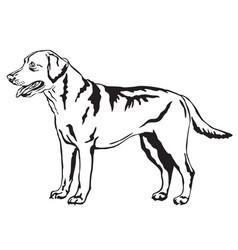 Decorative standing portrait labrador vector