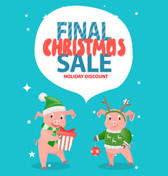 final christmas sale holiday discount with pigs vector image