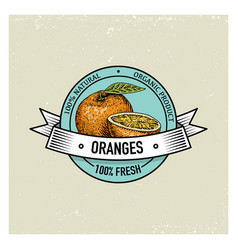 Orange vintage hand drawn fresh fruits background vector