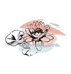 sketch water lilies with abstract brush strokes vector image