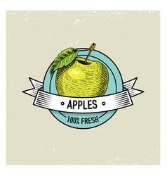 Apple vintage hand drawn fresh fruits background vector