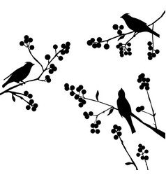 Birds on the branch - set of elements vector
