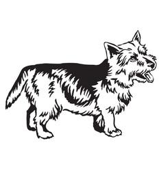 decorative standing portrait of norwich terrier vector image