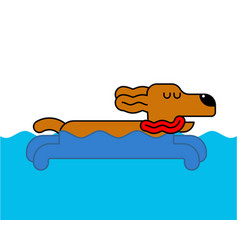 Dog swimming isolated home pet in water vector