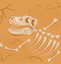 fossilized dinosaur skeleton buried in the ground vector image