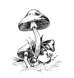 Mushrooms amanita vector