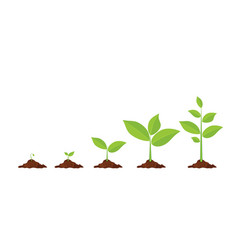 Phases plant growing vector
