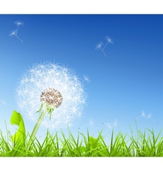 White dandelion vector