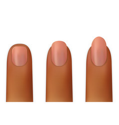 women nails isolated vector image