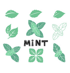 blue mint leafs icons and silhouettes set leaves vector image