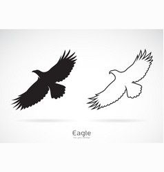 Eagle is spreading its wings on white vector