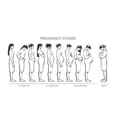 Women Pregnancy Stages vector