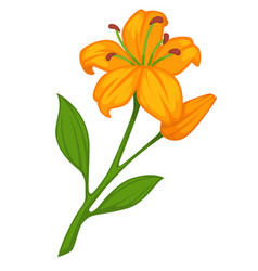 flower lily blossom bud or bloom flat vector image