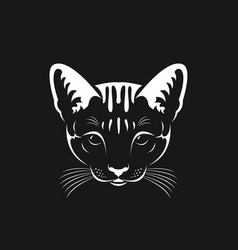 Cat face on black background pet animals vector