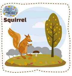 cute squirrel cartoon wildlife wild animal vector image