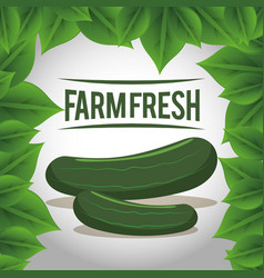 farm fresh cucumber vegetables natural vector image