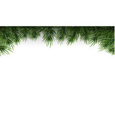 green christmas tree branches border on a white vector image