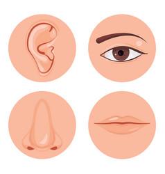 Human nose icon vector