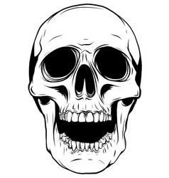 outline graphics skull in vector image