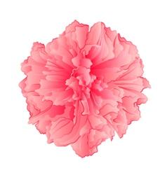 Pink flower sakura cherry blossoms isolated vector