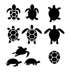 set of turtle and tortoise silhouette vector image vector image