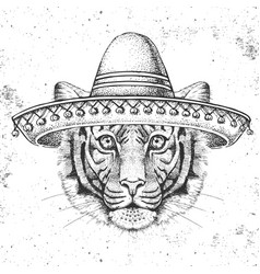 Hipster animal tiger wearing a sombrero hat vector