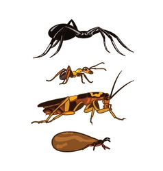 Insects Cartoon vector