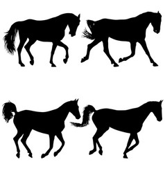 set animal silhouette of black mustang horse vector image