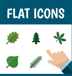 Flat icon ecology set of hickory spruce leaves vector