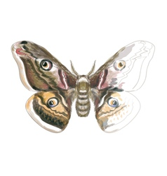 Butterfly Saturnia Pavonia vector image