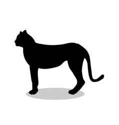 cheetah wildcat black silhouette animal vector image