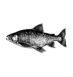 Arctic char salmon fish collection vector