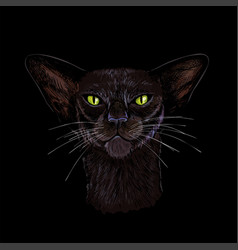 black oriental cat face with green eyes hand drawn vector image