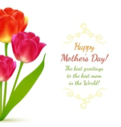 Buquet of tulips for Mothers Day vector image
