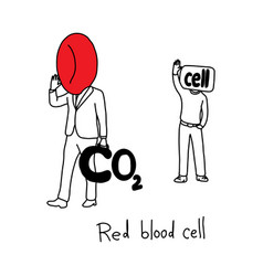 metaphor function of red blood cell vector image