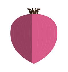 onion vegetable healthy food vector image