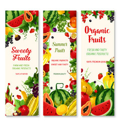 summer fruit and berry banner set for food design vector image