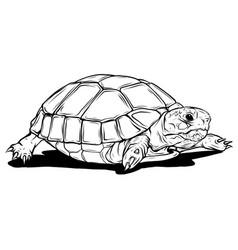 turtle icon cartoon vector image