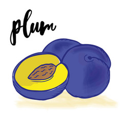 doodle hand drawn prunes vector image