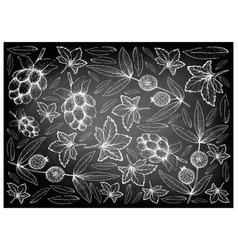 Hand drawn cloudberry and cabeludinha fruits on ch vector