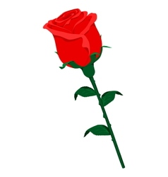 Isolated rose vector