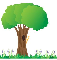 Squirrel on a tree vector