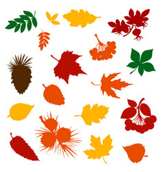 autumn leaf rowan berry and pinecone silhouettes vector image